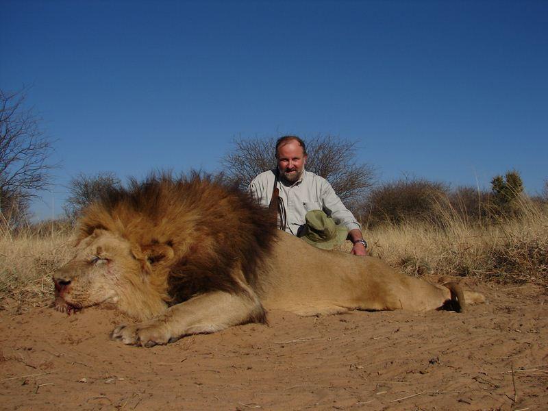 Lion_12
