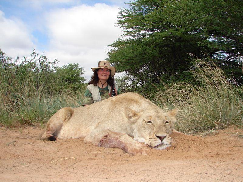 Lion_16