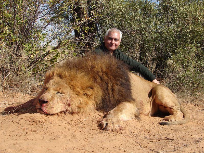 Lion_18