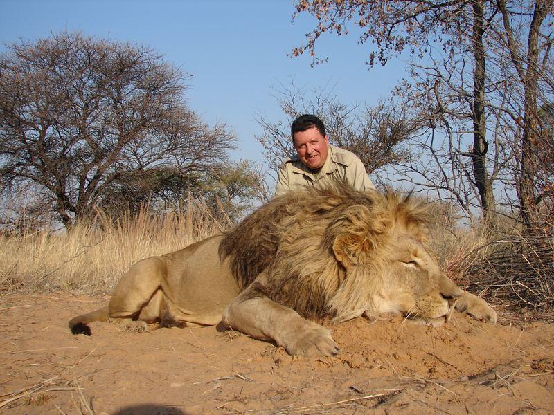 Lion_22