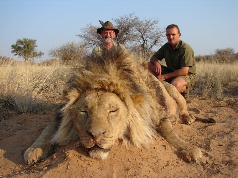 Lion_25