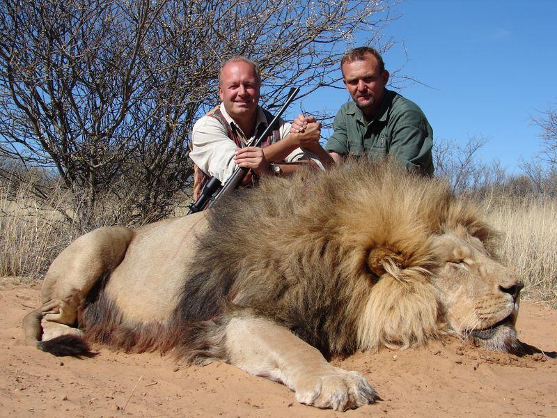 Lion_36