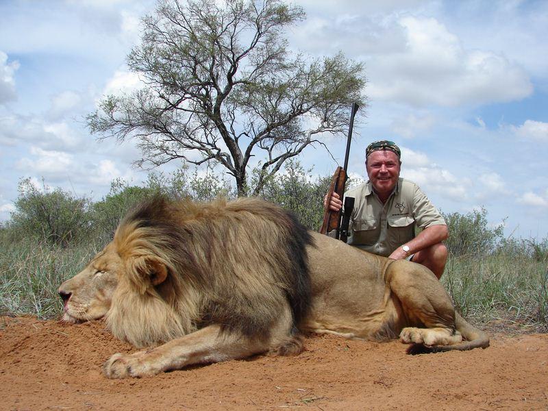 Lion_40