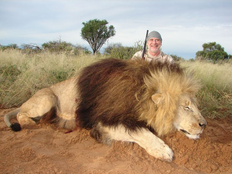Lion_45