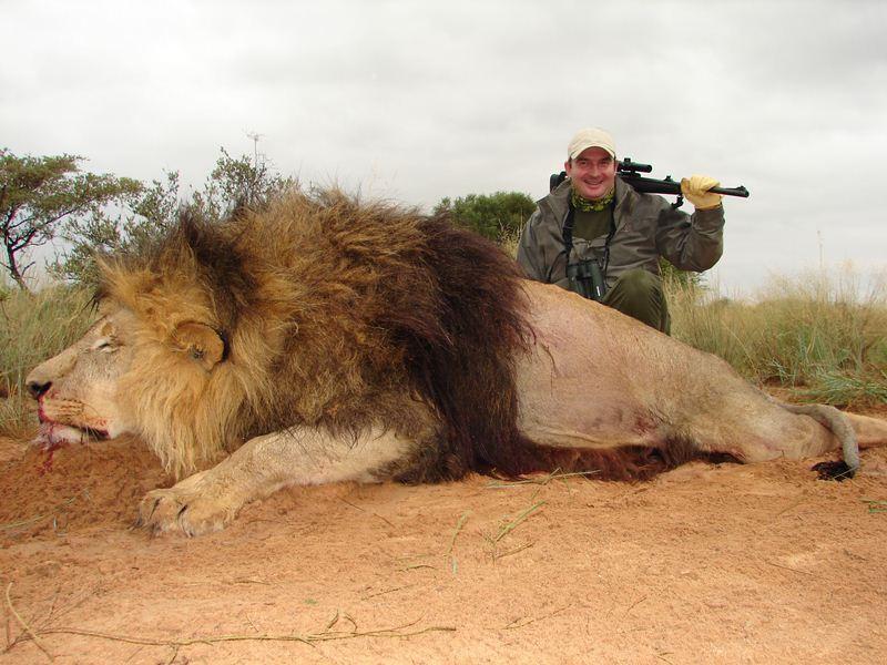 Lion_48