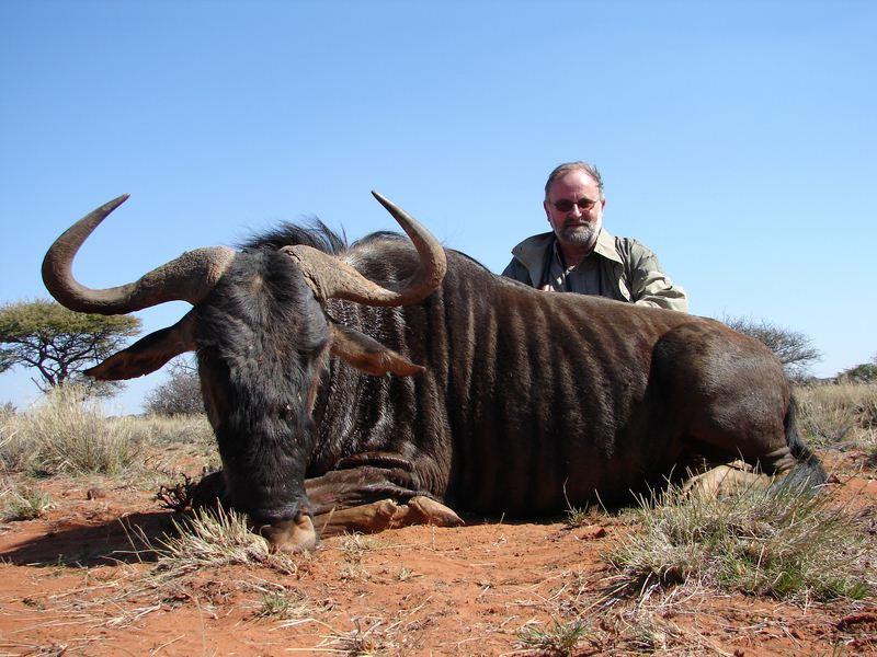 blue_wildebeest_3